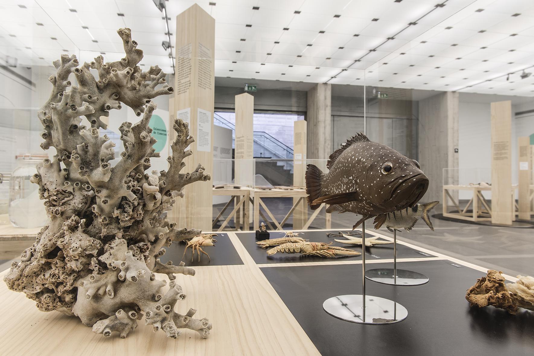 la trastienda del museo